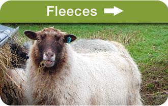 Fleeces s